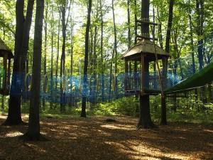 ośrodek sportów linowych tzw. małpi gaj w lesie, na zdjęciu ścieżki rozpięte na linach pomiędzy drzewami