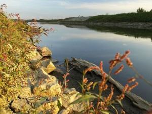 Polder Buków. Na zdjęciu zbiornik wodny otoczony roślinnością
