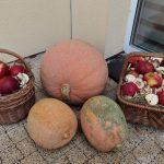 Festyn Barwy Jesieni w Oazie Aktywności w Wodzisławiu Śl. Fotorelacja z imprezy 12.10.2021 r. Na zdjęciu dekoracja